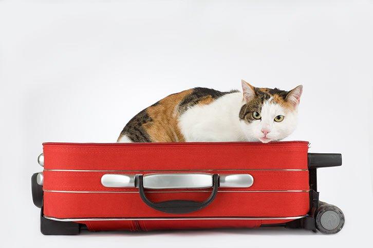 Gato sobre maleta