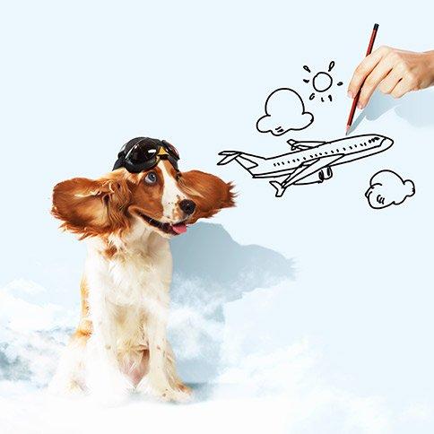Perro y dibujo de un avión