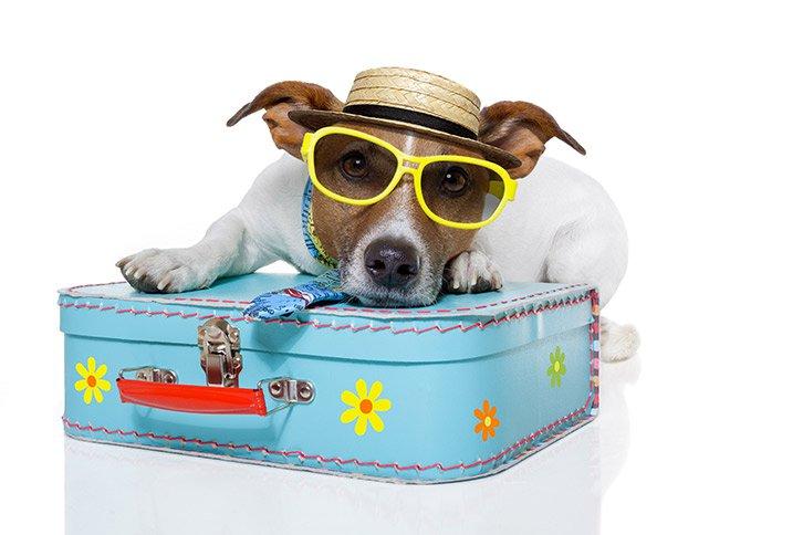 Perro sobre una maleta