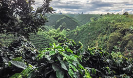 Colombia Cafetera